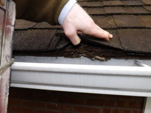 Roof edge and fascia board rot due to poor gutter and general roof maintenance