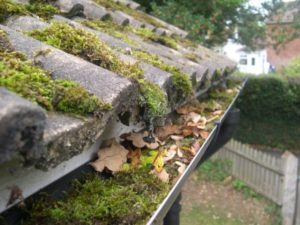 Moss growth an roof and in gutters